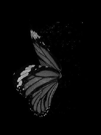Анимация С крыльев бабочки слетает серебряная пыльца