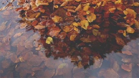 Анимация Осенние листья в луже
