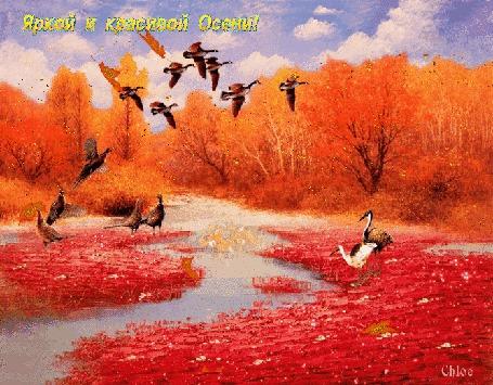 Анимация Осенние сочные краски, птицы, речушка, вдали виднеется лес, идет листопад, (Яркой и Красивой Осени!), Chloe