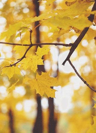 Анимация Осенние листья колышутся на ветке