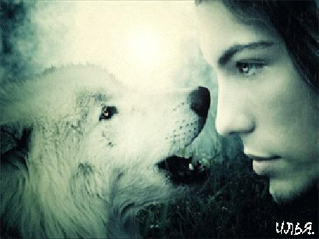 Анимация Парень и волк смотрят друг на друга