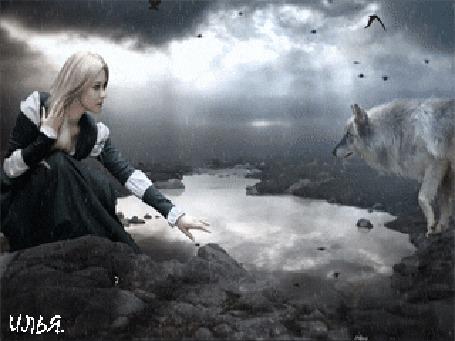 Анимация Девушка, прикасаясь левой рукой к воде, смотрит на стоящего напротив нее волка, над которыми пролетают птицы