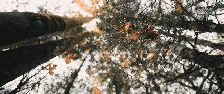 Анимация Падающие листья и капли дождя