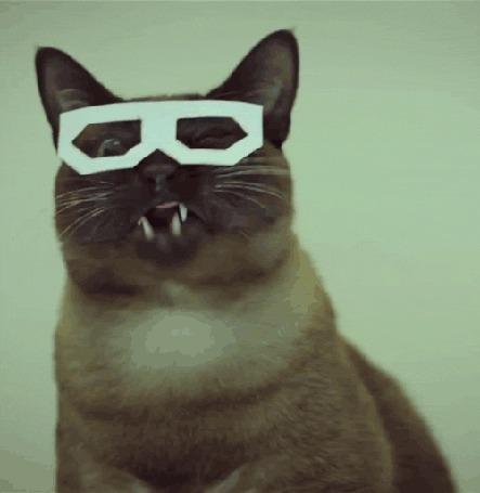 Анимация Тайский кот Скифча / Skifcha cat в прикольных очках и с накладными усами