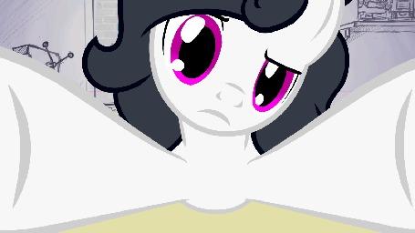 Анимация Пони смотрящий в объектив камеры из мультсериала Мои маленькие пони: Дружба — это чудо / My Little Pony: Friendship is Magic, by age3rcm