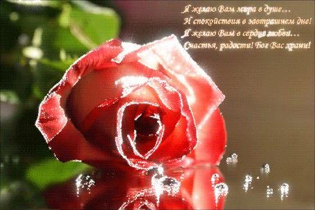 Анимация Сверкающая роза лежит на зеркальной поверхности (Я желаю Вам мира в душе. . . И спокойствия в завтрашнем дне! Я желаю Вам в сердце любви. . . Счастья, радости! Бог Вас храни!)