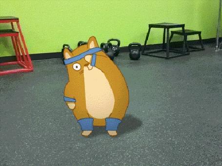 Анимация Кот занимается в тренажерном зале