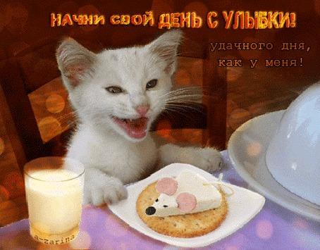Анимация Белый котенок сидит за столом, плотоядно улыбаясь. Перед ним стоит тарелка с пирожным в виде белой мышки на печеньке и стакан молока (Начни свой день с улыбки! Удачного дня, как у меня!), автор A-zarina