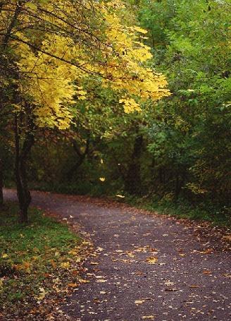 Анимация Желтые листья падают на тропинку в осеннем лесу, by Daria Khoroshavina