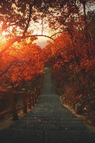 Анимация Ступенчатая дорога среди осенних деревьев освещается солнцем