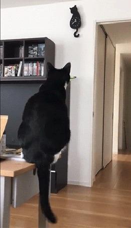 Анимация Кот смотрит на часы и машет хвостом