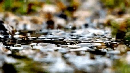 гиф анимация лист плывет по воде