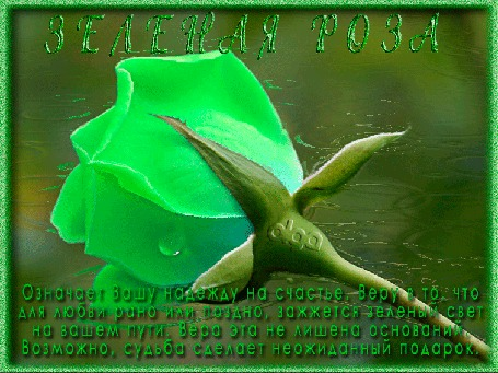 Анимация Зеленая роза на фоне воды