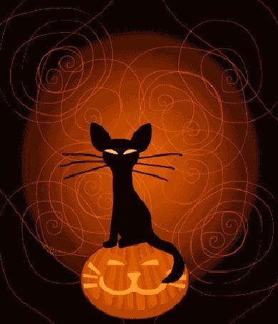Анимация Черный кот сидящий на тыкве