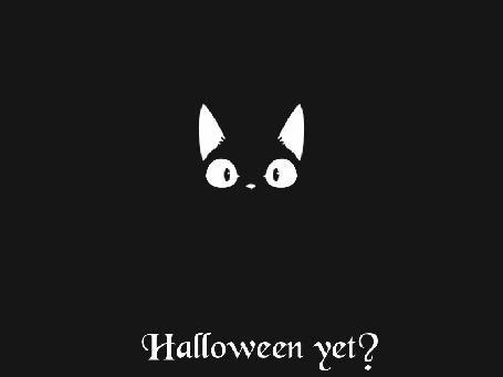 Анимация Черный кот просыпается, оглядывается в темноте и засыпает снова (Halloween yet? / Хэллоуин уже?)