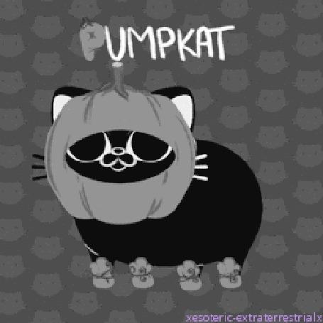 Анимация Кот с тыквой на голове (Pumpkat)
