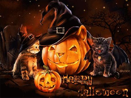 Анимация Звездной ночью кошечка-ведьмочка и котик-летучая мышь зажгли светильники Джека и празднуют Хэллоуин (Happy Halloween / Счастливого Хэллоуина), by dixinox