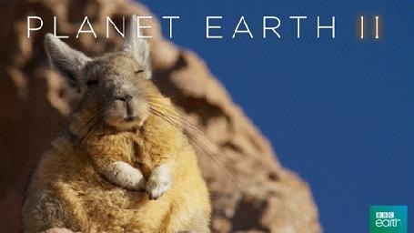 Анимация Заяц спит, пригревшись на солнышке (Planet earth / Планета Земля), by BBC Earth