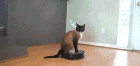 Анимация Сиамский кот катается на роботе пылесосе и пугает собаку