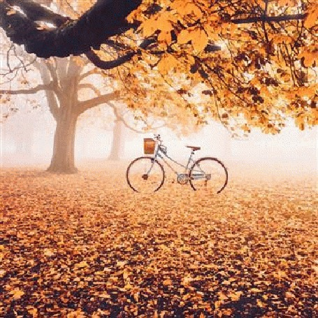 Анимация Велосипед под листопадом