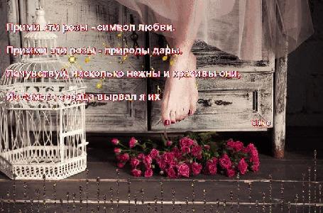 Анимация Под ногами у девушки, сидящей на комоде, на полу лежит букет алых роз рядом с пустой ажурной клеткой для птиц, (Прими эти розы - символ любви, Прими эти розы - природы дары. Почувствуй насколько нежны и красивы они, из самого сердца вырвал я их), исходник от фотографа Nora Drugan, автор Chloe