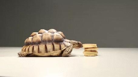 Анимация Черепаха пытается поесть оладушков