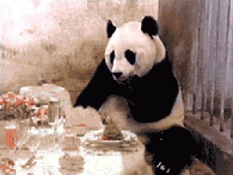 Анимация Панда ест в ресторане, потом принесли чек