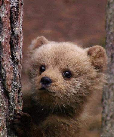 Анимация Смешной медвежонок стоит у дерева
