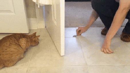 Анимация Парень играет с рыжим котом