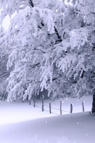 Анимация Заснеженное дерево и забор под снегопадом