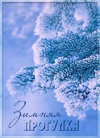 Анимация Снег на еловой ветке, (Зимняя прогулка), by Lida Girna