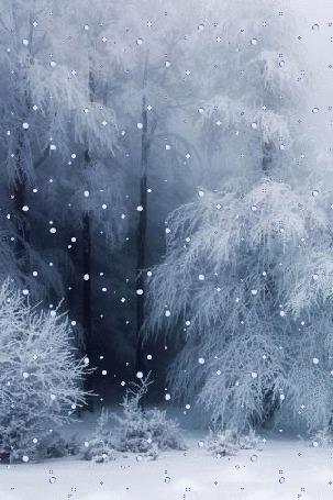 Анимация Снег идет в запорошенном лесу