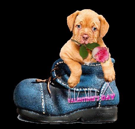 Анимация Милый щенок с розой в зубах сидит в ботинке, (Valentine, s day- День святого Валентина), by Mageta44