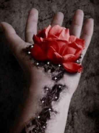 Анимация Красная роза растет из раны на руке