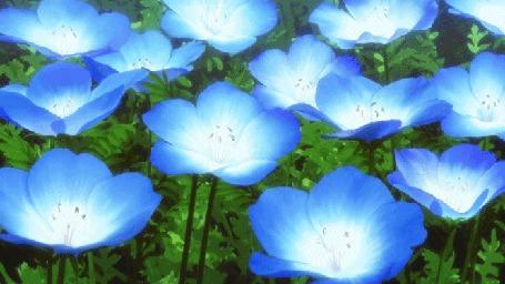 Анимация Голубые цветы раскачиваются от ветра, аниме Невеста чародея / The Magicians Bride / Mahou Tsukai no Yome