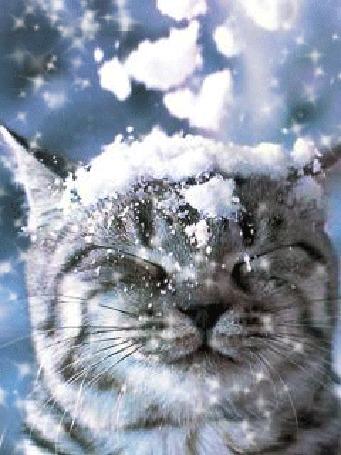 Анимация На голову кота падает снег