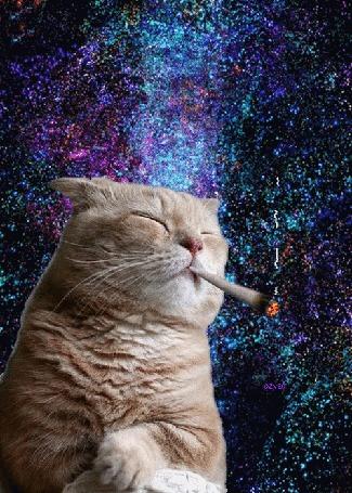 Анимация Рыжий кот курит на фоне звездного неба