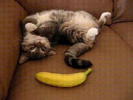 Анимация Очередные приколы с котом, который боится бананов