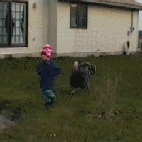 Анимация Агрессивный индюк нападает на ребенка
