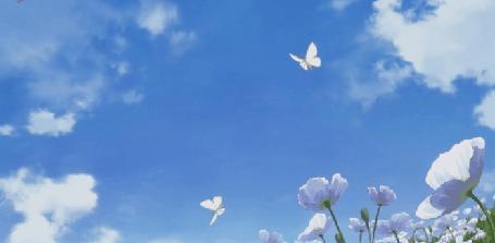 Анимация Белые бабочки порхают над цветами, кадр из аниме Полноценная жизнь онлайн / Net-juu no Susume