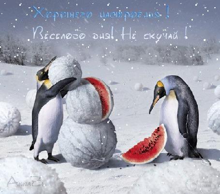 Анимация Пингвины лепят снеговика из арбуза (Хорошего настроения! Веселого дня! Не скучай!)