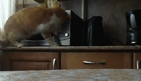 Анимация Рыже-белая кошка открывает крышку микроволновки, спрыгивая со стола с чем-то в зубах