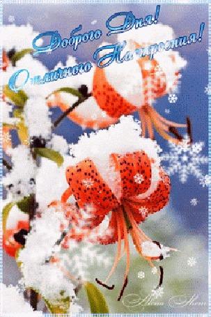 Анимация Лилии заснеженные на фоне падающих крупных снежинок, (Доброго дня! Отличного настроения!)