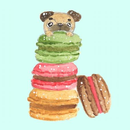 Анимация Двое песиков и печеньки макарун, by jessthechen