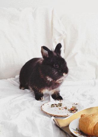 Анимация Черный кролик кушает с тарелки, сидя на постели, by Daria Khoroshavina