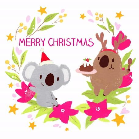 Анимация Коалы отмечают Рождество (merry christmas)