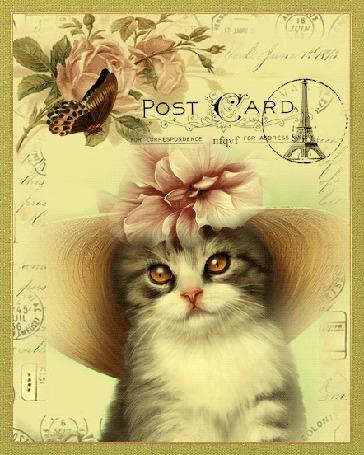 Анимация Кошечка в шляпке и бабочка на почтовой открытке (Post Card), by nfgyf