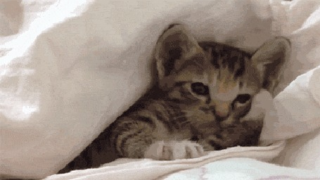 Анимация Котенок под одеялом сладко зевает