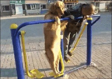 Анимация Собака с хозяином занимается спортом