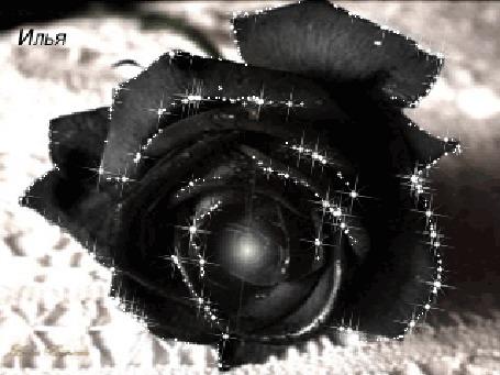 Картинки с черными розами анимация, картинки